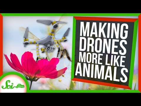 How Studying Animals Is Helping Us Make Better Drones