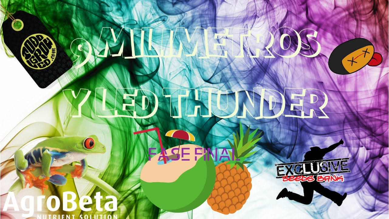LED THUNDER y NUEVE MILIMETROS Exclusive