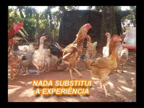 NADA SUBSTITUI A EXPERIENCIA  (lição de vida) APRENDA!!!!