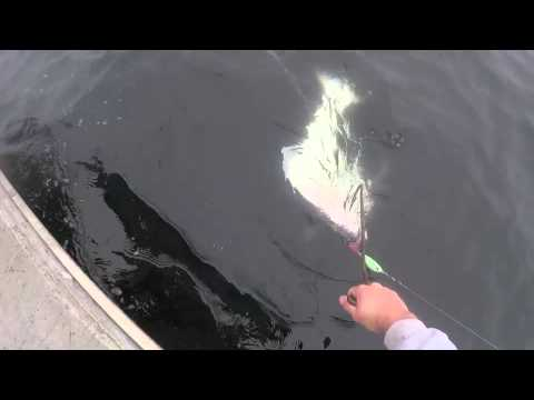 how to fish for halibut in bc