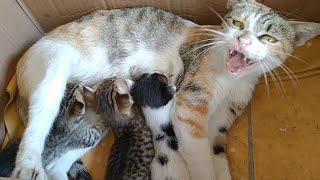 Mother Cat Not Adopting Orphan Kitten