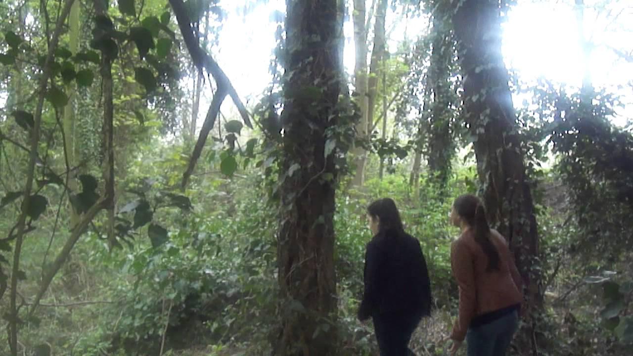 Download het mystrieuse bos: TBS