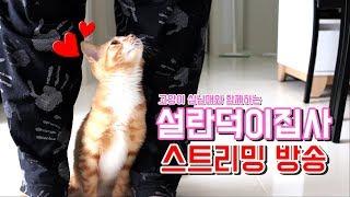 설란덕이집사] 막내 고양이 더기의 땅콩 송별회합니다..ㅠㅠ