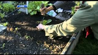 Summer Gardening Tips: Watering, Harvesting and Planning for Winter