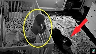 The camera recorded what this dog does at night with the baby!