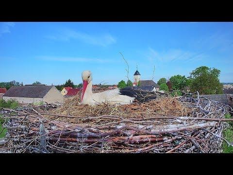 Storchennest Fohrde - HD Livestream direkt aus dem Nest (Stork, Bocianie, лелека, čáp, roda, gólya)