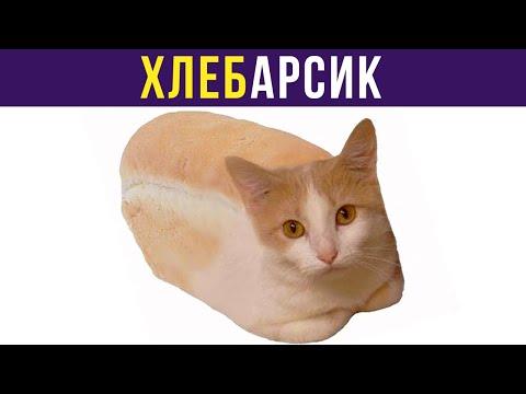 Приколы с котами. ХЛЕБАРСИК | Мемозг #266