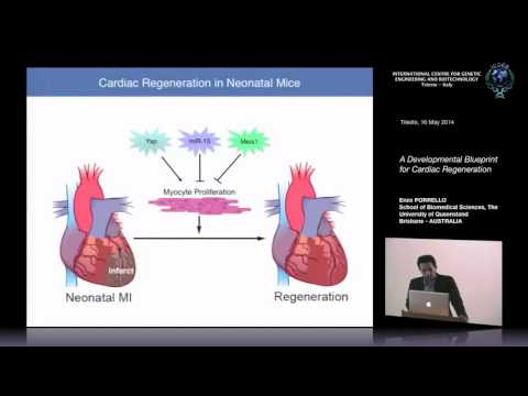 E. Porrello - A Developmental Blueprint for Cardiac Regeneration