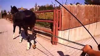 Jak układać konia część 3 - Giewont wychodzi na ulicę