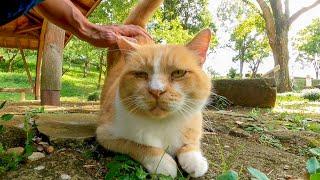 公園の東屋付近をウロウロする野良猫をナデナデするとゴロゴロと喜んでカワイイ
