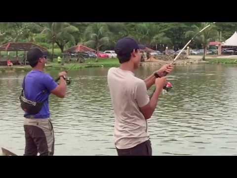 Chao Phraya Catfish at Kolam Pancing Seksyen 24