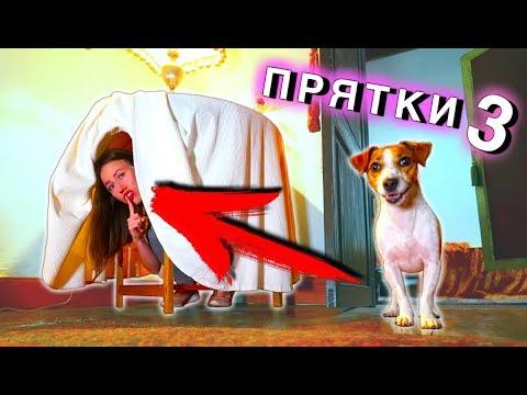 ИГРАЕМ в ПРЯТКИ В Доме Призраке с Собакой Джиной | Elli Di Pets