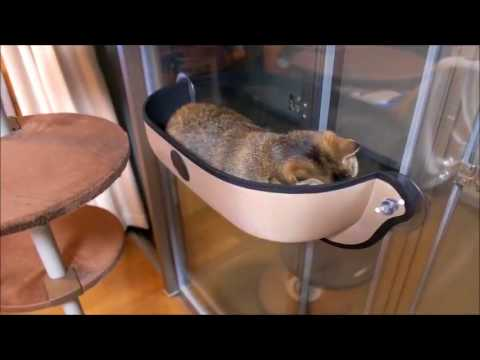 cat window bed hammock cat window bed hammock   youtube  rh   youtube