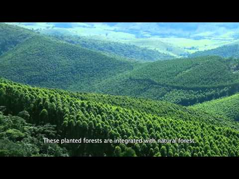 The tree industry and the restoration of the Atlantic Forest