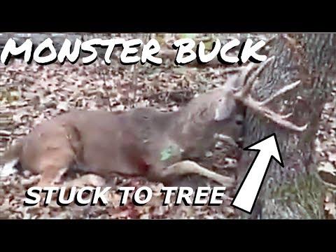 Monster Buck Dies Stuck To Tree  S8