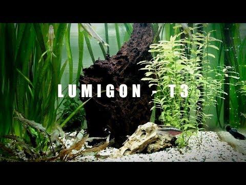 Lumigon T3 - Cinnematic Review eines dänischen Smartphones - Moschuss.de