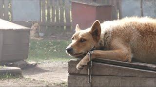 В приюте для животных «Ласка» этим летом появилось более сотни новых собак