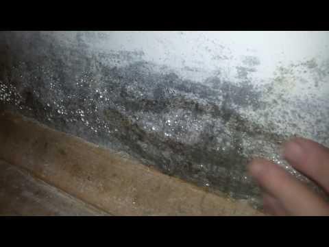 Конденсат на окнах и стенах! Плесень и грибок? Как избавиться? Ужастик
