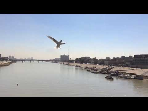 Seagulls at the Tigris river ; the heart of Baghdad(Iraq