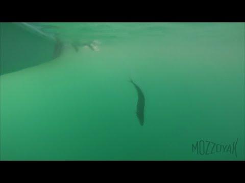 Una pescata in compagnia parte seconda... Feel Free Corona Kayak fishing