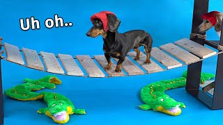 Wiener Dog Obstacle Challenge! [Extended Version!]