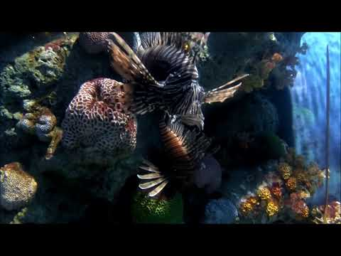 Sea Life - Ocean World Bangkok Full Tour 2018