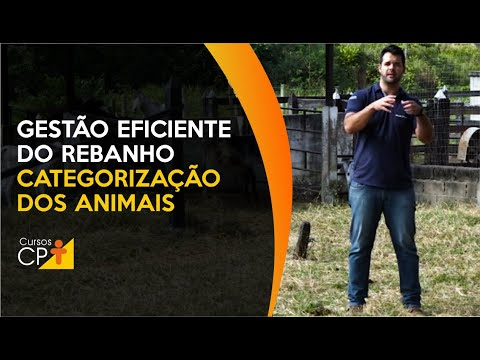 Clique e veja o vídeo Gestão Zootécnica na Pecuária Leiteira