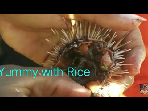 Yummy Sea Urchin at Talisay Beach Bitoon Dumanjug Cebu Philippines