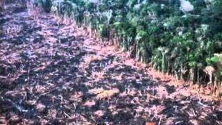 Terrorismo ambiental.wmv