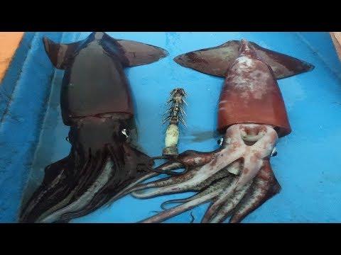 #PESCA Nocturna De Calamar Gigante ( POTA)  80 Millas Mar Afuera │Episodio #3 ✔