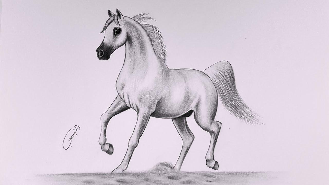 كيفية رسم حصان في الرصاص How To Draw A Horse With A Pencil