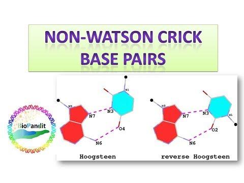 Musical: Non Watson Crick Base Pairs