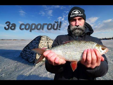 сорожка рыба прикормка