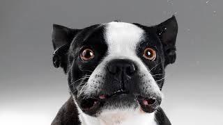 Какой запах отпугивает собак, чтобы не гадили дома, на улице?