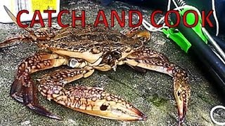 BAREHANDED! CATCH AND COOK BLUE SWIMMER CRAB! HOW TO CATCH YOURSELF