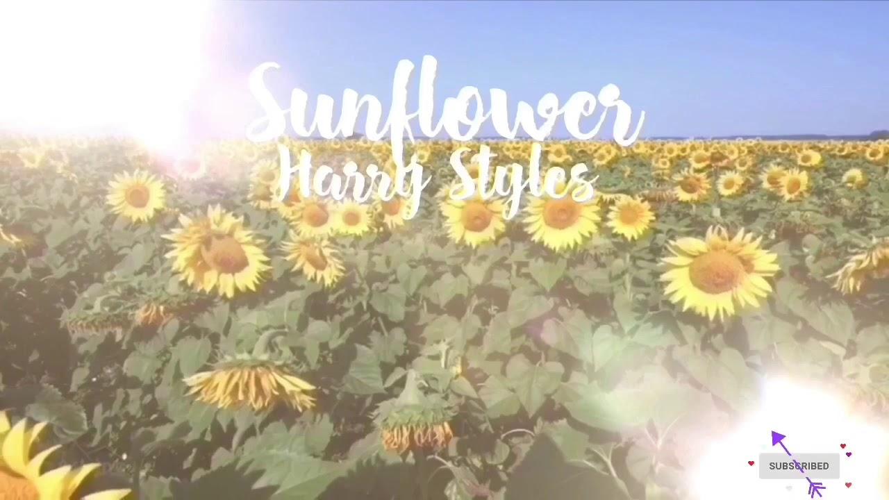 Sunflower Vol.6 Lyrics Harry Styles - YouTube