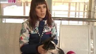 Воспитанники детских домов побывали в приюте для животных «Сострадание»