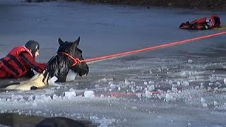 1 Horse Dead, 1 Rescued After Fall Through Ice