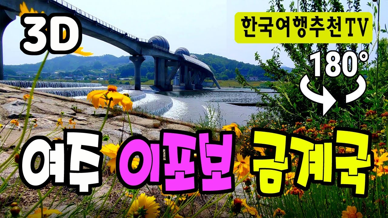 🔴 180° 3D VR 여주 이포보 금계국 - Yeoju Ipobo Geumgyekuk Flower in Korea (with Clova Dubbing)
