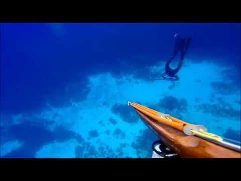Chasse sous marine Martinique 2014 avec Claude chasseur 3