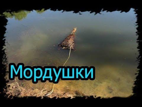 Рыбалка на мордушки, Ловушки для рыбы.