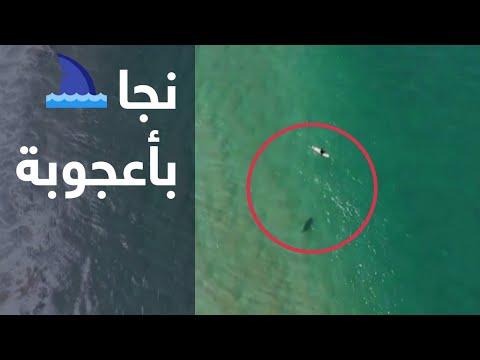 راكب أمواج يهرب من سمكة قرش في اللحظة الأخيرة  - نشر قبل 42 دقيقة