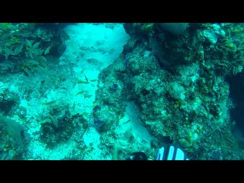 Cozumel Drift Dive 09-25-12