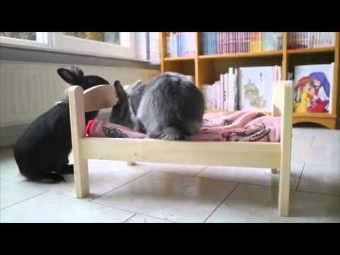Un Petit Lit Ikea Pour Lapin Youtube