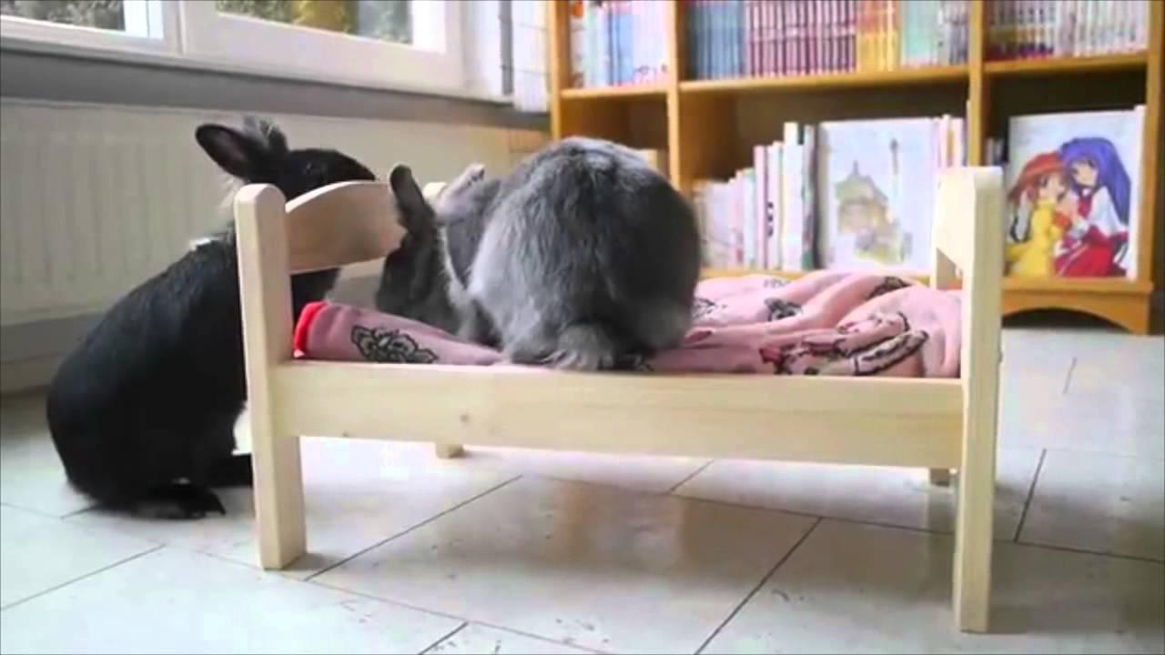 Un Petit Lit Ikea Pour Lapin
