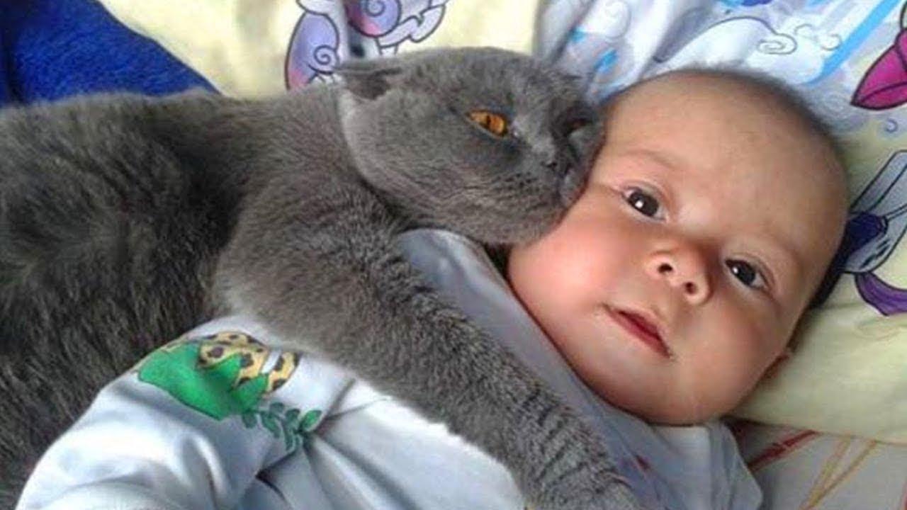 Реальные Случаи, Когда Животные Защитили Маленьких Детей!