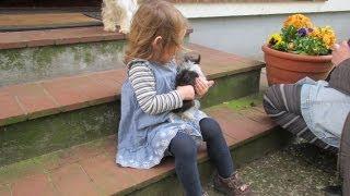 Biewer-yorkshire-terrier Spielen Mit Kleinkind