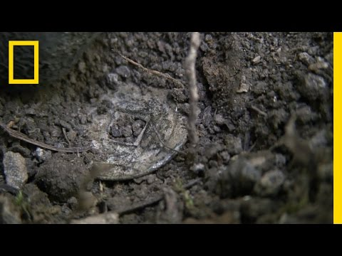Chinese Coin | National Geographic