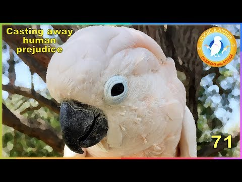 71 Casting away human prejudice to see parrots in a new light