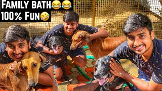 BATH WITH MY DOGS | DOG LOVERS